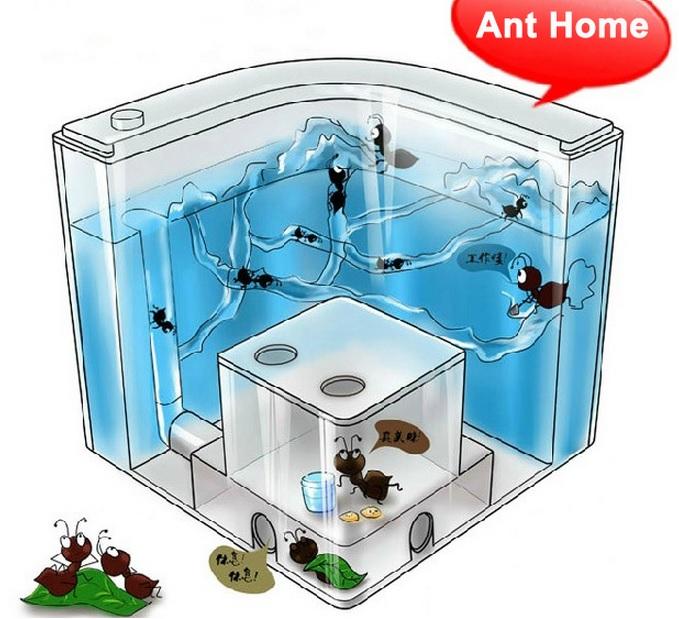 Ферма для муравьев