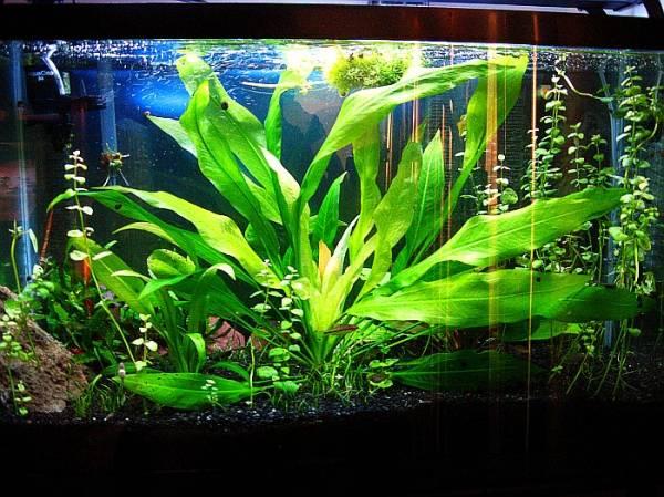 Семена аквариумных растений 15 видов 100 семян