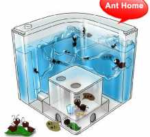 МУРАВЬИНАЯ ФЕРМА на СТОЛЕ с питательным гелем для муравьев - природа дома
