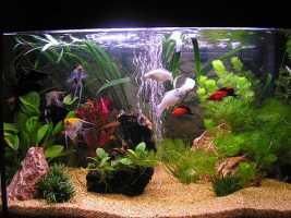 Семена аквариумных растений 100 семян 15 видов